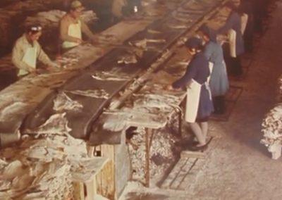 La empresa en los años 50