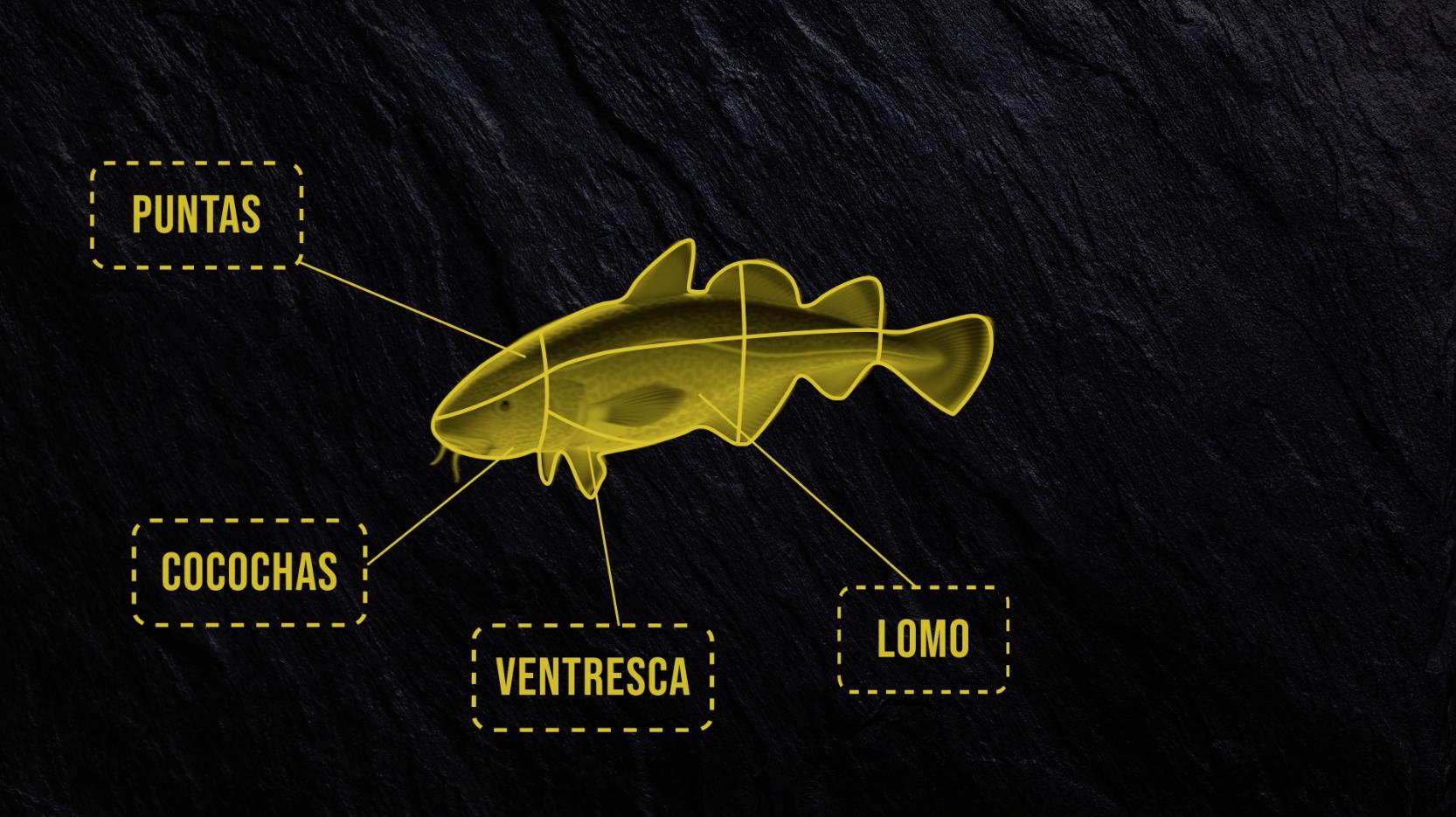 anatomia del bacalao anfabasa
